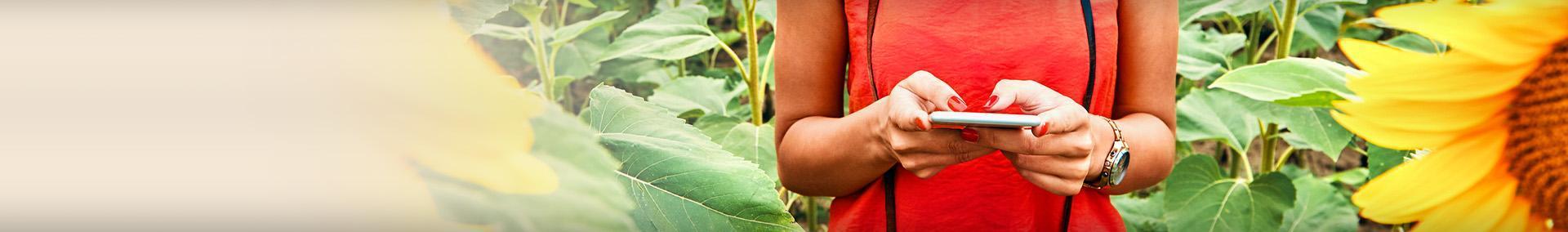 kobieta z telefonem komórkowym, słoneczniki